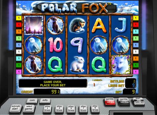 Polar Fox pelaa peliautomaattia verkossa
